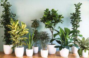 Прокат растений Пермь